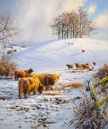 Highland Cattle in the Snow